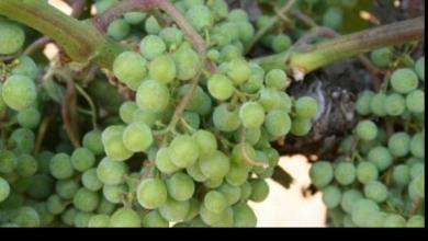 5-clendenen-vineyard-Franklin-Liquors