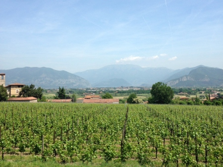 7-ronco-calino-franciacorta-winery-Franklin-Liquors