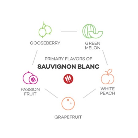 7B-taste-of-sauvignon-blanc-by-winefolly-Franklin-Liquors