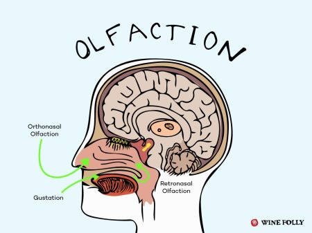 14-olfaction-chart-our-sense-franklin-liquors