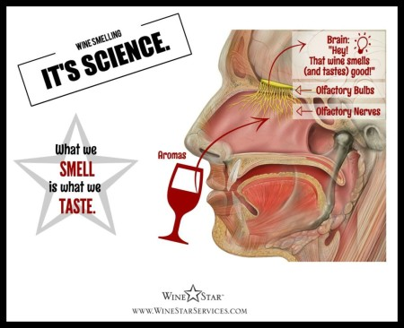 2-Wine-Smelling-Its-Science-Franklin-Liquors