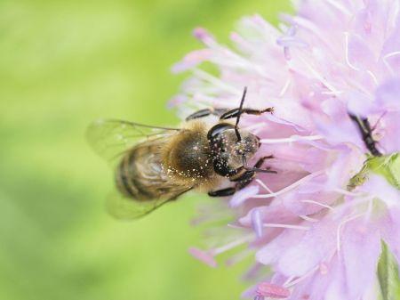 14-Honeybee_Franklin-Liquors