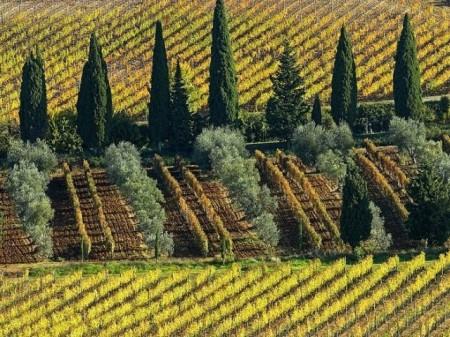 3-Vineyard-Near-Montalcino-Franklin_Liquors