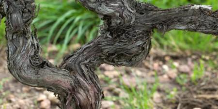 1-old-vines-Franklin-Liquors
