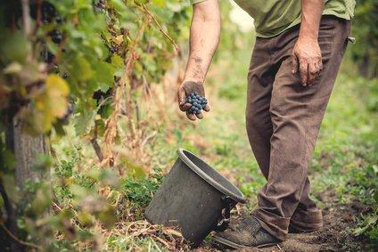 3-Vignerons-wine-grower-Franklin-Liquors