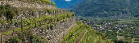 5-Valtellina-Franklin-Liquors