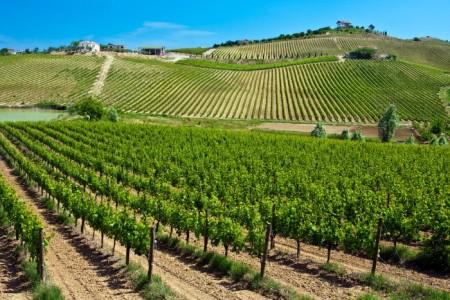 6-Abruzzo-vineyards-Franlin-Liquors