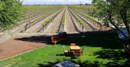 13-bogle-vineyards-Franklin-Liquors