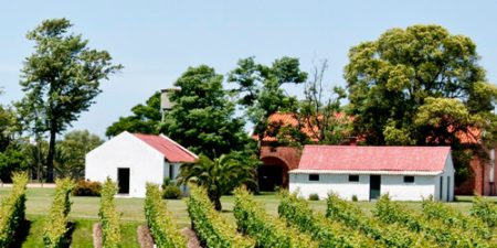 1-Vineyard_in_Uruguay-Franklin-Liquors