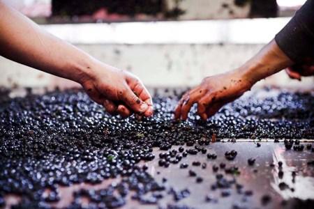 14-Wine_Franklin-Liquors
