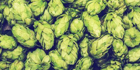 a11-hops-aging-ipa-franklin-liquors