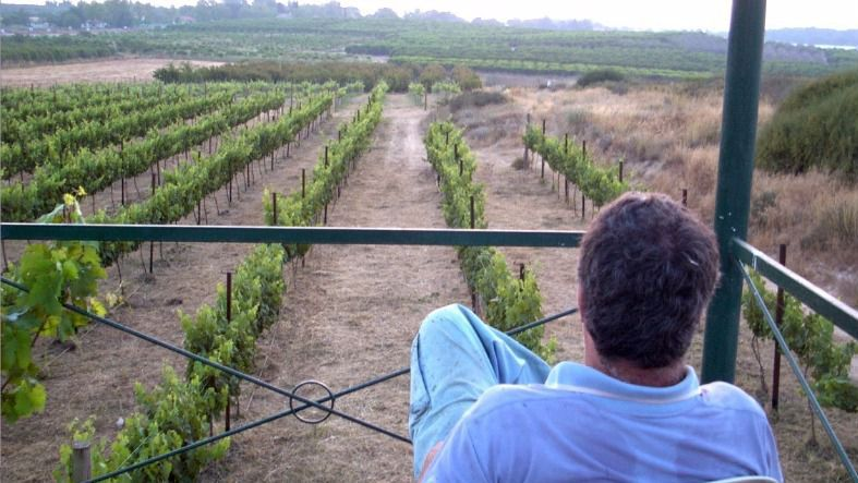 20-zeev-vineyard-franklin-liquors