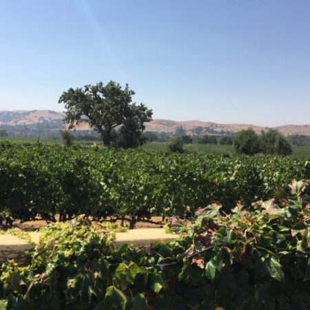 10-livermorevineyards-franklin-liquors
