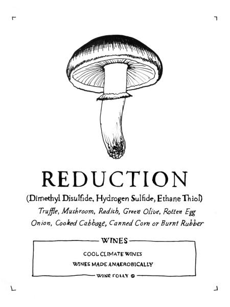 2-reduction-in-wine-folly-illustration-mushroom-franklin-liquors