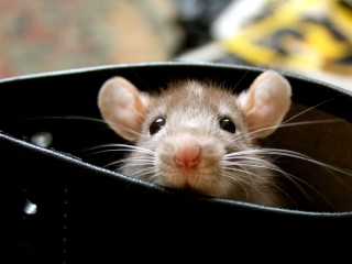 Image result for mouse in boots